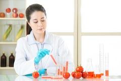 Генетическая еда gmo изменения может сохранить миллионы людей Стоковая Фотография RF