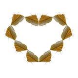 Геометрические формы бабочки на белой предпосылке выглядеть как вред Стоковая Фотография RF
