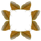 Геометрические формы бабочки на белой предпосылке выглядеть как вред Стоковая Фотография