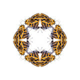 Геометрические формы бабочки на белой предпосылке выглядеть как вред Стоковое Изображение