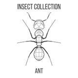 Геометрический значок муравья Стоковая Фотография