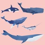 Геометрический покрашенный комплект кита Стоковые Фото