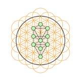 геометрия священнейшая Дерево жизни в цветке жизни иллюстрация штока