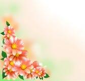георгин граници флористический Стоковые Изображения RF