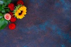 Георгин и солнцецветы стоковые изображения rf
