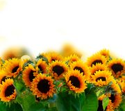 Георгин и солнцецветы стоковое фото