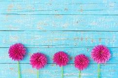 георгин цветет пинк Стоковые Изображения RF