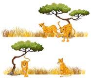 Гепард в поле иллюстрация штока