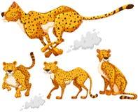 Гепард в 4 различных действиях иллюстрация вектора