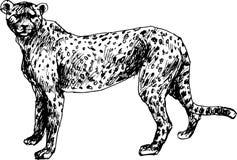 Гепард нарисованный рукой Стоковые Изображения