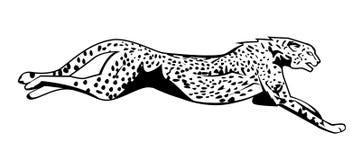 Гепард скачет иллюстрация вектора