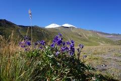 Гераниум горы стоковая фотография rf