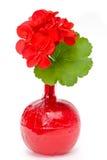 гераниум крови Стоковая Фотография RF