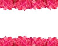 гераниум цветка граници Стоковые Изображения RF