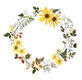 Гербарий с полевыми цветками, ветвями, листьями Ботаника на белой предпосылке, открытка, венок бесплатная иллюстрация