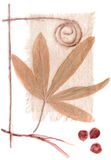гербарий Стоковые Фото