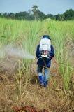 Гербицид фермера распыляя на поле сахарного тростника Стоковое фото RF
