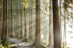 Германия, баварский лес Стоковое Изображение