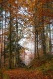 Германия, земля Berchtesgadener, лес осени, туман Стоковое Фото