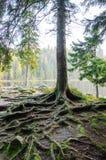 Германия, озеро Arbersee стоковые фотографии rf