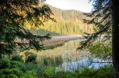 Германия, озеро Arbersee Стоковое Фото