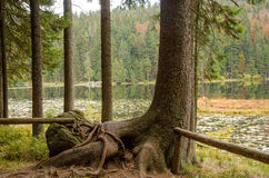 Германия, озеро Arbersee Стоковое Изображение