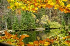 Германия, озеро Arbersee Стоковая Фотография