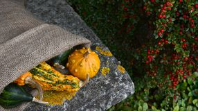 Гессенский мешок необыкновенных бородавчатых тыкв апельсина и зеленого цвета Стоковые Фотографии RF