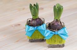 Гиацинты в стекловарных горшках с украшением зеленого джута и голубого смычка Стоковые Изображения