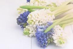 Гиацинты гиацинта Beautufil голубые и белые тонизировали предпосылку белых цветков горизонтальную стоковое фото