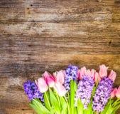 Гиацинты и тюльпаны стоковые изображения rf
