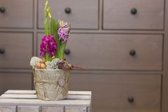 Гиацинты и daffodils цветков весны в декоративных баках на деревянной коробке Стоковая Фотография