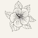 Гибискусы Гаваи цветут, листают для страницы книжка-раскраски для взрослого Стоковое Фото