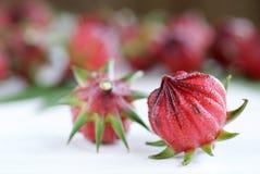 Гибискус или roselle приносить на белом деревянном столе Стоковые Изображения RF