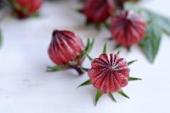 Гибискус или roselle приносить на белом деревянном столе Стоковая Фотография