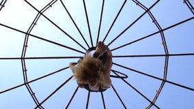 Гибкая женщина выполняет воздушные фокусы акробатики в кольце против голубого неба под куполом сток-видео