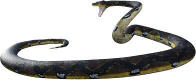 Гигантская змейка, забастовка, изолированное нападение, стоковые изображения rf