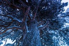 Гигантская линия деревьев в Jukkasjarvi, Швеции стоковая фотография rf