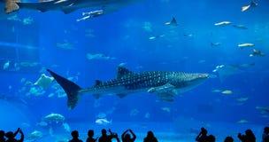 Гигантская китовая акула underwate фантазии Стоковые Изображения