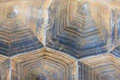 Гигантская предпосылка текстуры раковины черепахи Стоковое Изображение RF
