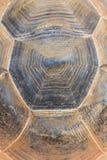 Гигантская предпосылка текстуры раковины черепахи Стоковая Фотография RF