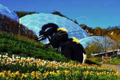 Гигантская пчела на проекте Eden в Корнуолле, Англии стоковые изображения rf