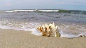 Гигантская раковина лягушки на пляже акции видеоматериалы