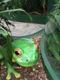 Гигантская статуя зеленой лягушки Стоковые Фотографии RF