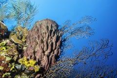 Гигантская стена кораллового рифа губки бочонка Стоковые Изображения