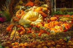 Гигантская тыква, сквош, мамы и сортированные тыквы Стоковые Изображения