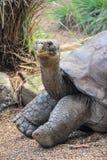 Гигантская черепаха в зоопарке Австралии стоковые фото