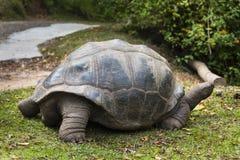 Гигантская черепаха, Ла Digue, Сейшельские островы Стоковые Изображения RF
