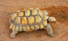 гигантская черепаха Стоковое Фото