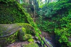 Гигантская ящерица в священном лесе обезьяны, Ubud, Бали, Индонезии стоковые изображения rf